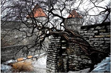 Фоторабота «Стены старого Таллинна»